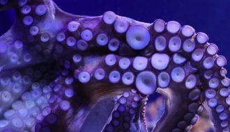 """Giải mã bí ẩn máu của """"quái vật biển cả"""" có màu xanh"""