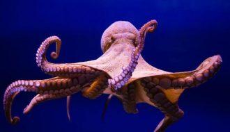 Hé lộ bí mật của quái vật biển cả có 3 trái tim