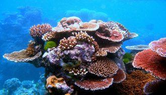 Những điều chưa biết về san hô