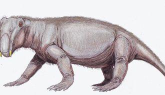 Phát hiện hóa thạch sinh vật kỳ dị ở siêu lục địa đã mất Pangaea