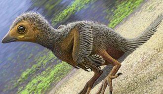 Tìm ra loài chim dùng đá quý làm thức ăn và sống cùng thời với khủng long
