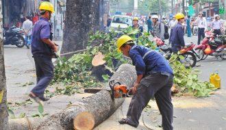 Trước khi chặt hạ cây xanh cần phải thông tin đến người dân