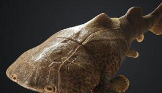"""Xuất hiện hóa thạch loài cá da phiến có da """"bọc thép"""" tại Trung Quốc"""